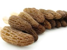 Free Morel Mushrooms Stock Photography - 5206502