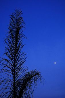 Early Evening Palm - Closer Royalty Free Stock Photography