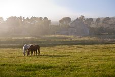 Free Horses In Fog Stock Images - 5208134