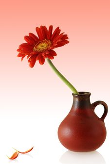 Free Gerber In Red Vase With Couple Single Petals Stock Photos - 5208363