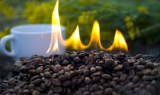 Free Roasted Coffee Royalty Free Stock Photos - 5208538