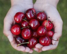 Free Cherries Stock Photography - 5208742