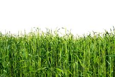 Free Green Field Isolated Stock Image - 5208951