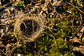 Free Small Empty Nest Royalty Free Stock Photo - 52024885