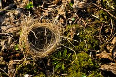 Free Small Empty Nest Royalty Free Stock Photo - 52024885