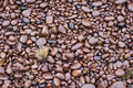 Free Red Stones Of Provence Coast Stock Images - 5217014