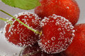 Free Cherry With Bubbles Royalty Free Stock Photo - 5217455