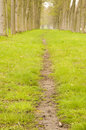 Free Footpath In The Alley Of Trees Royalty Free Stock Photo - 5217945