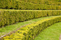 Free Hedgerow Plant Background Royalty Free Stock Photo - 5218805