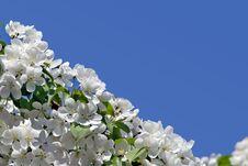 Free Spring Branch. Stock Photos - 5210923