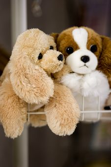 Free Toy Puppies Stock Photos - 5211003