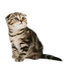 Free Cute Little Kitten Royalty Free Stock Photos - 5211168