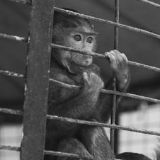 Free Caged Baby Baboon Stock Photos - 5211293