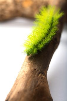 Scary Green Caterpillar Royalty Free Stock Images