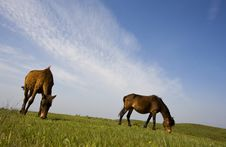 Free The Horse  Under The Sky Stock Image - 5211981