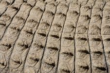 Croc Skin 1 Royalty Free Stock Photos