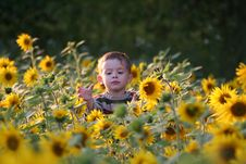 Free The Child In Sunflowers Stock Image - 5212891