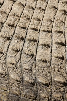 Croc Skin Royalty Free Stock Photos