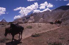 Free Trekking In Zanskar Royalty Free Stock Photo - 5213655