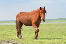 Free Wild Horse On Meadow Royalty Free Stock Image - 5214286