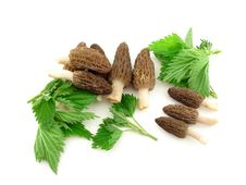 Free Morels And Nettles Stock Photos - 5214453