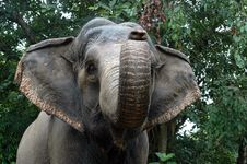 Free A Close-up Of An Elephant Stock Photography - 5214532