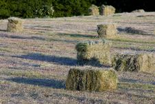 Packed Hay Stock Images