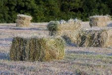 Packed Hay Stock Image