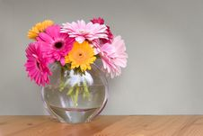 Free Gerber Daisies In A Vase Royalty Free Stock Photography - 5214747