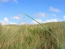 Free Grass And Sky Landscape Royalty Free Stock Photography - 5214777