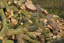 Free Logs Stock Photography - 5214862