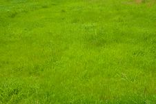 Free Grass II Stock Photos - 5216453