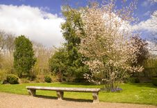 Free Bench Under The Tree In Blossom Royalty Free Stock Images - 5218329