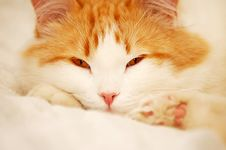 Catnap Stock Photo