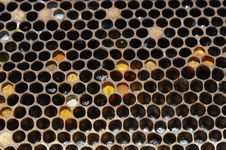 Free Honeycomb Stock Images - 5219234