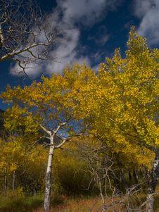 Free Autumn Passing Stock Image - 5219401