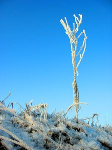 Free Morning Frost Royalty Free Stock Photos - 5219718