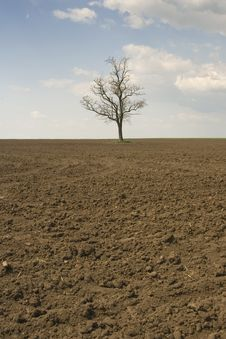 Free Alone Tree With Blue Sky Stock Photo - 5219780