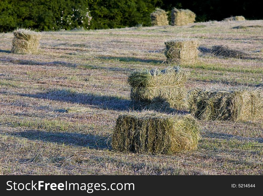 Packed hay