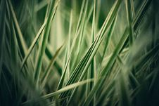 Free Grass One 1 Royalty Free Stock Images - 52153719