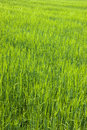 Free Lush Green Field Stock Images - 5220194