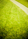Free Green Grass Path Royalty Free Stock Images - 5222479