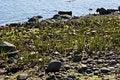 Free Ocean Grass Stock Photography - 5226222