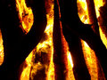 Free Burning Wood Stock Photography - 5226482