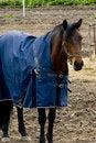 Free Working Horse Stock Image - 5227941