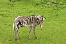 Free Photograph Of A Zebra Stock Images - 5220714