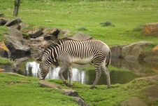 Free Photograph Of A Zebra Stock Images - 5220784