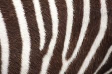 Free Black And White Stripes Stock Photo - 5220860