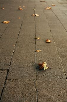 Free Sidewalk In Autumn Royalty Free Stock Photos - 5221218