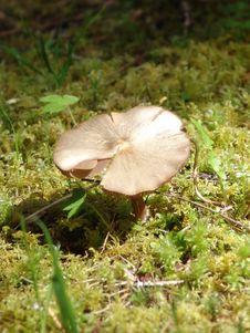 Free Spring Mushroom Stock Image - 5221421
